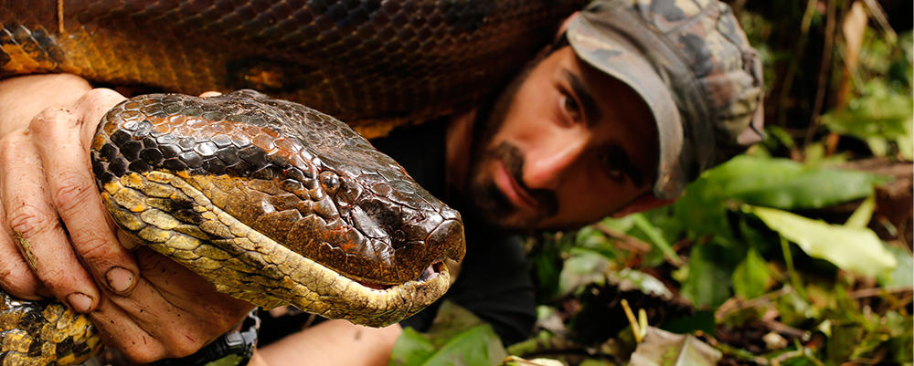 Paul Rosolie With a Giant Green Anaconda