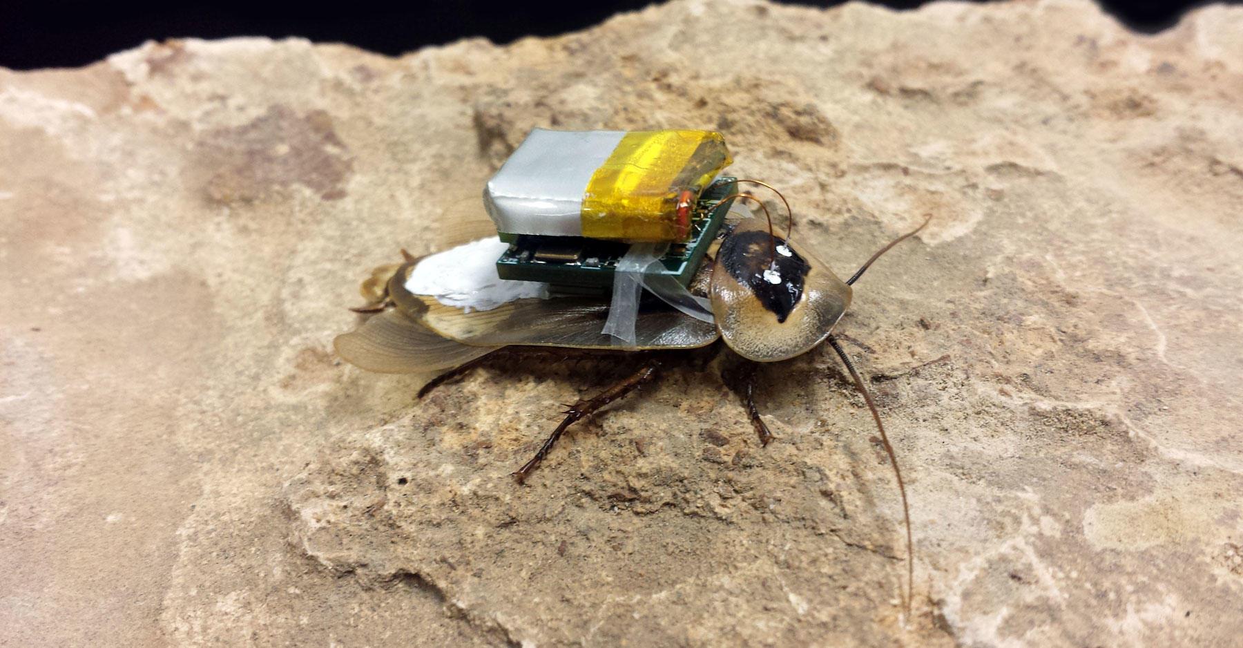 Remote-control cockroach