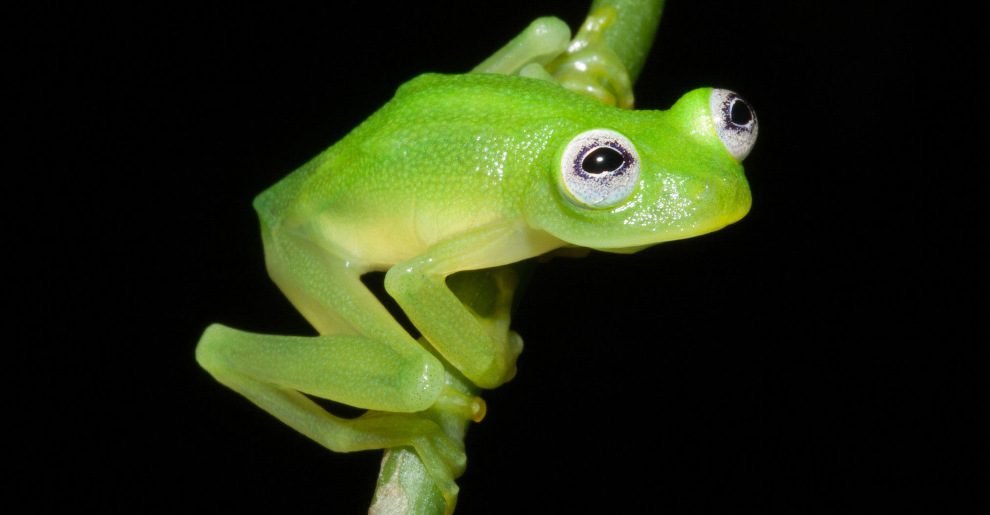 Kermit The Frog Stock Photos and Pictures