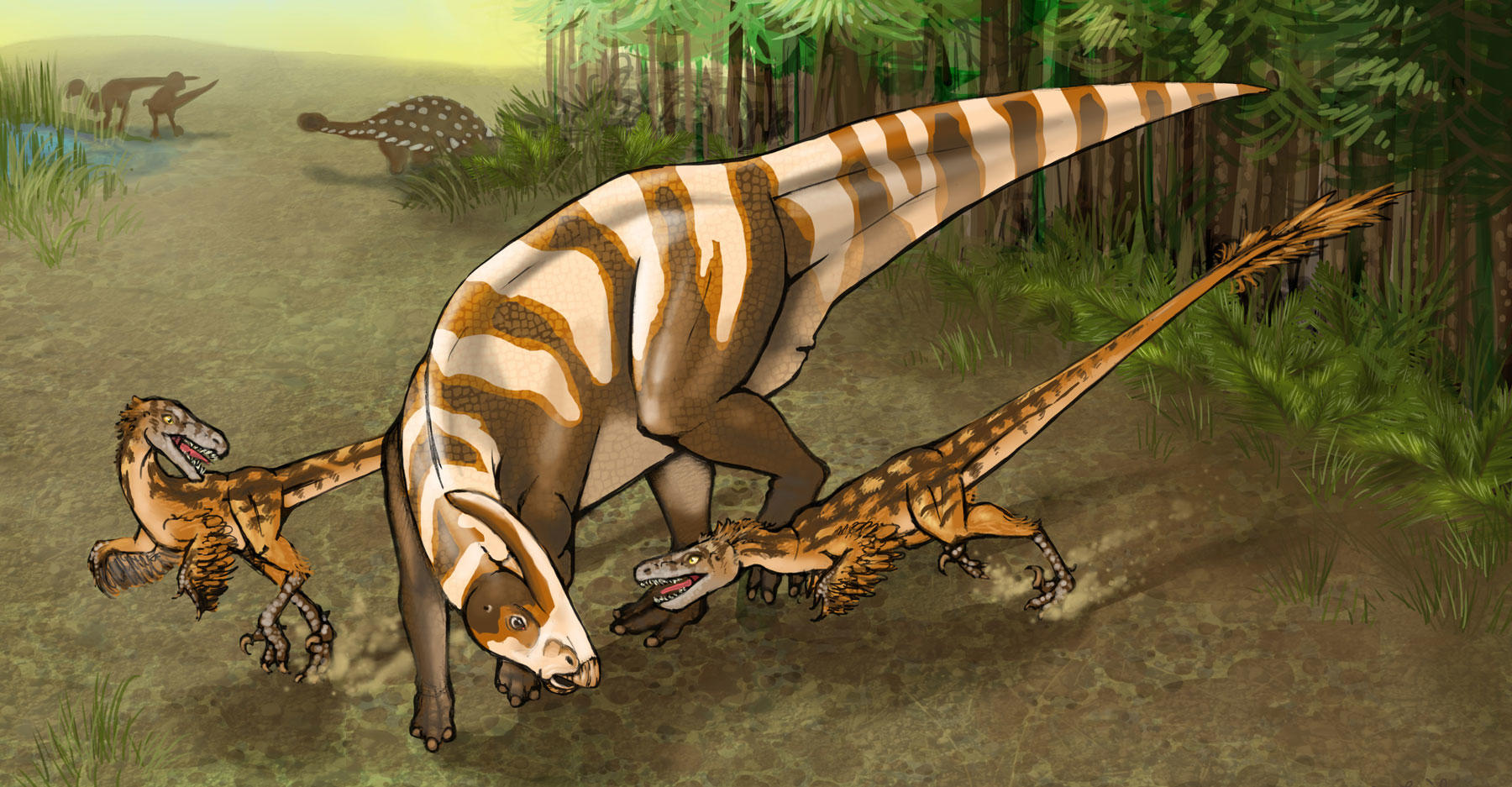 Saurornitholestes sullivani illustration