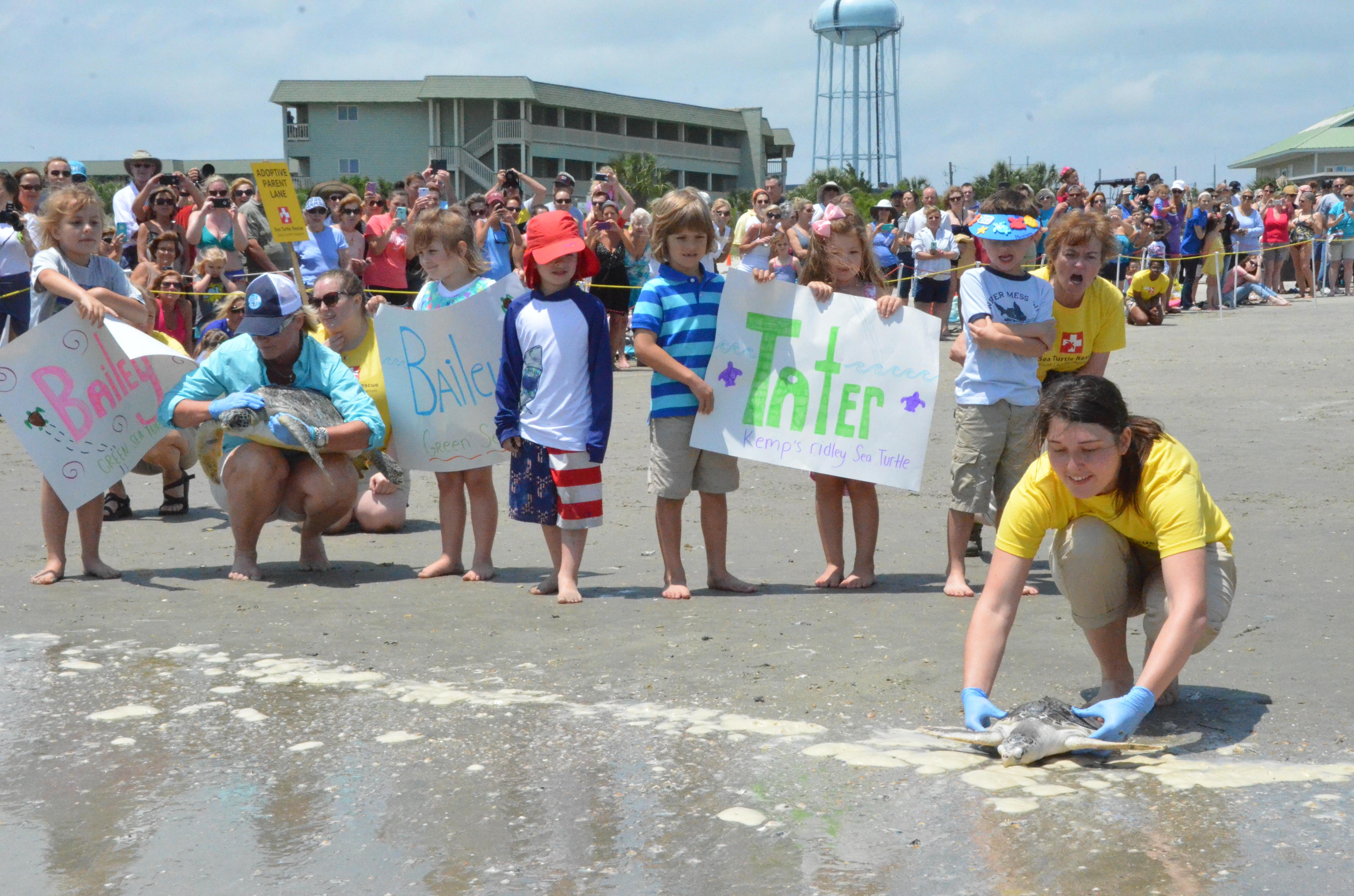 SC Sea turtle release