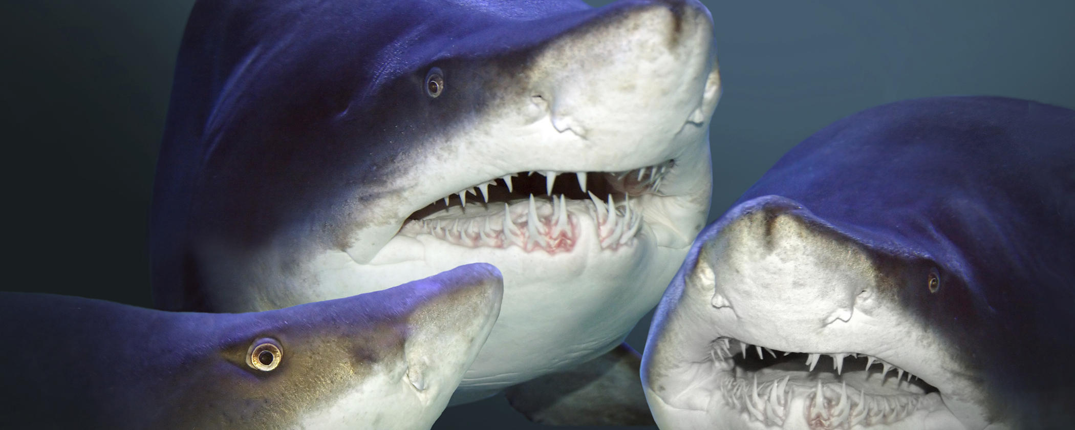 Shark Squad