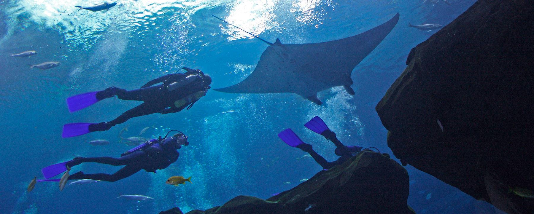 Georgia Aquarium ray divers
