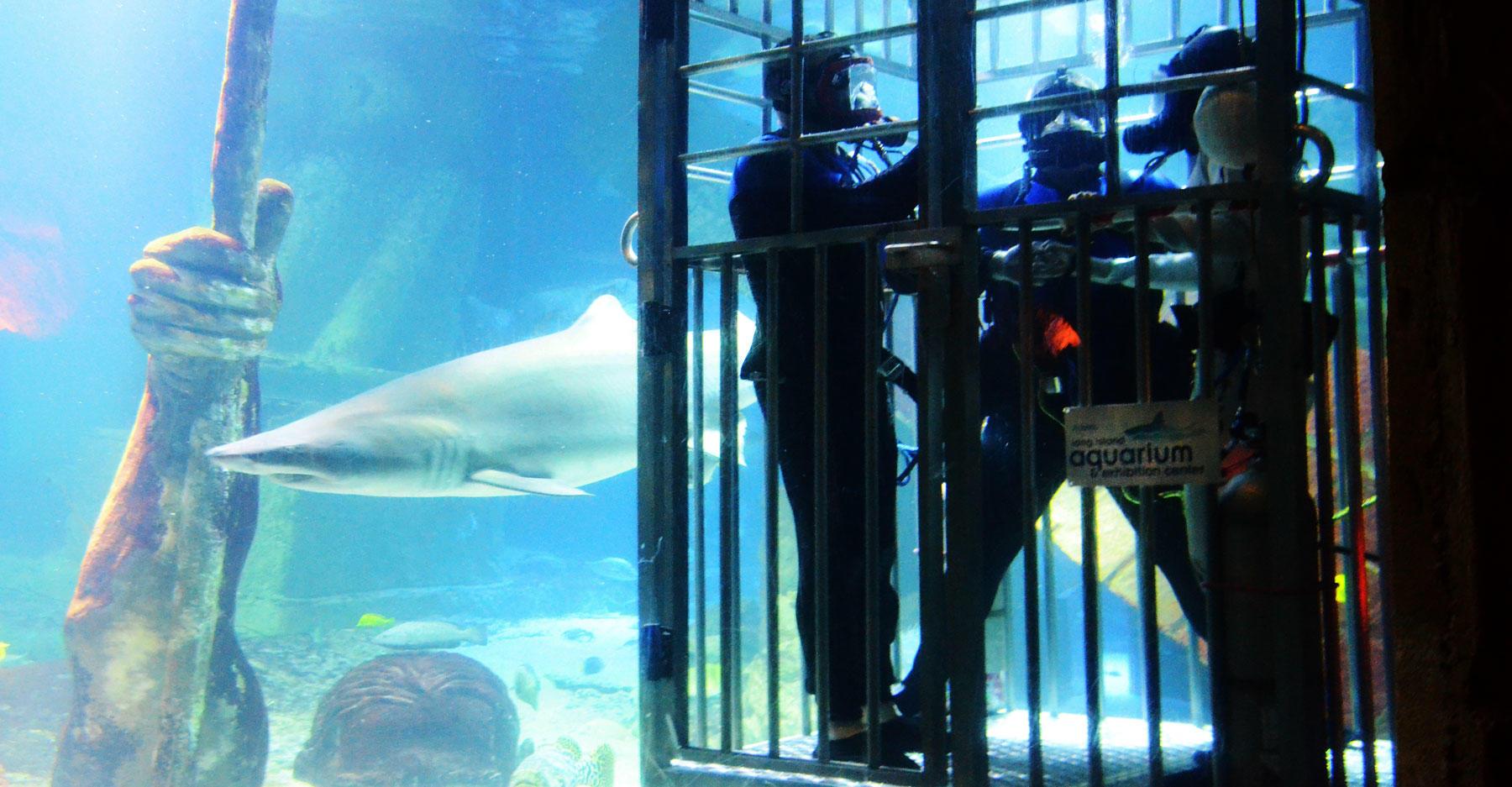 Shark Dive Wedding