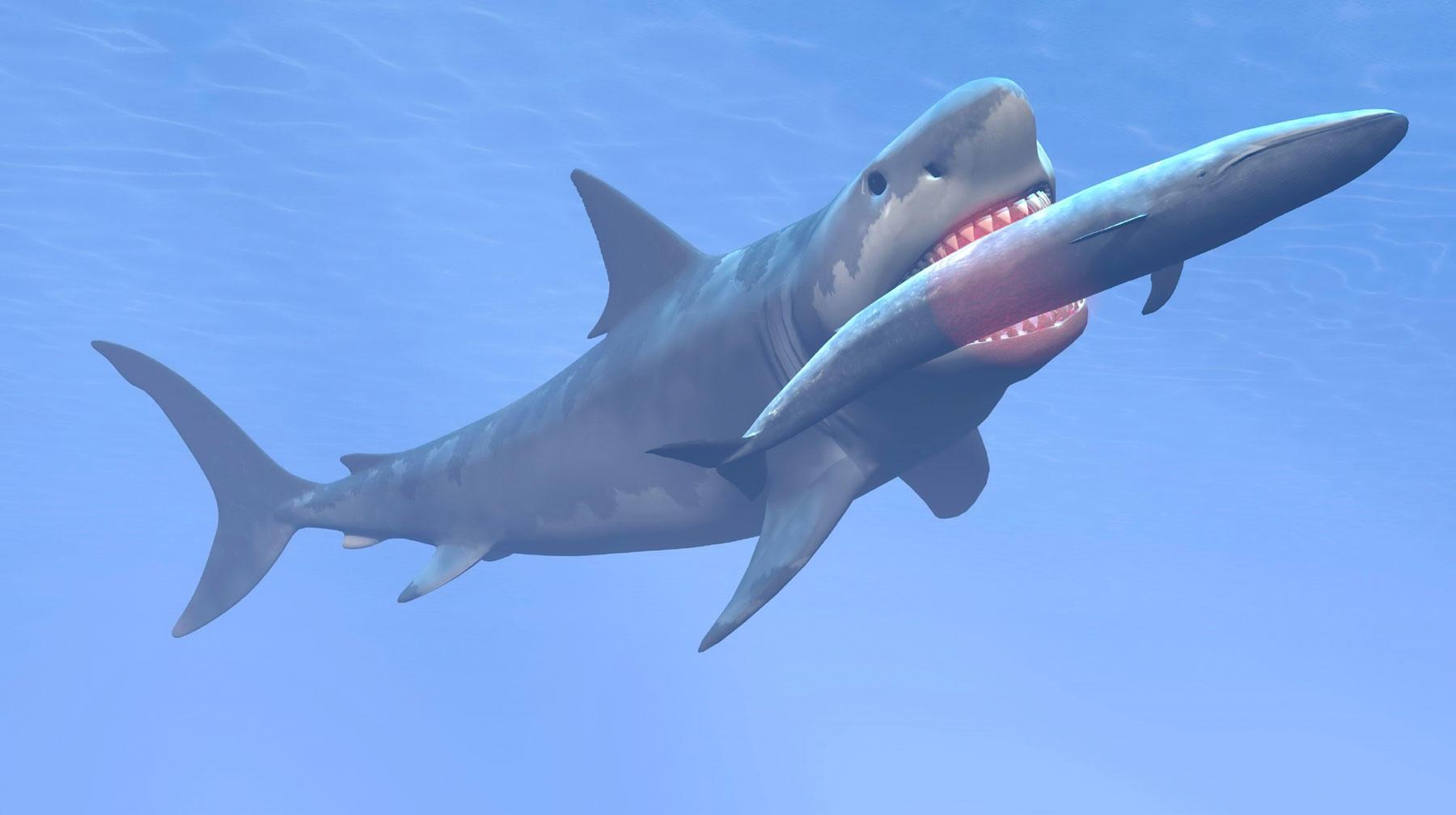 shark eating blue whale