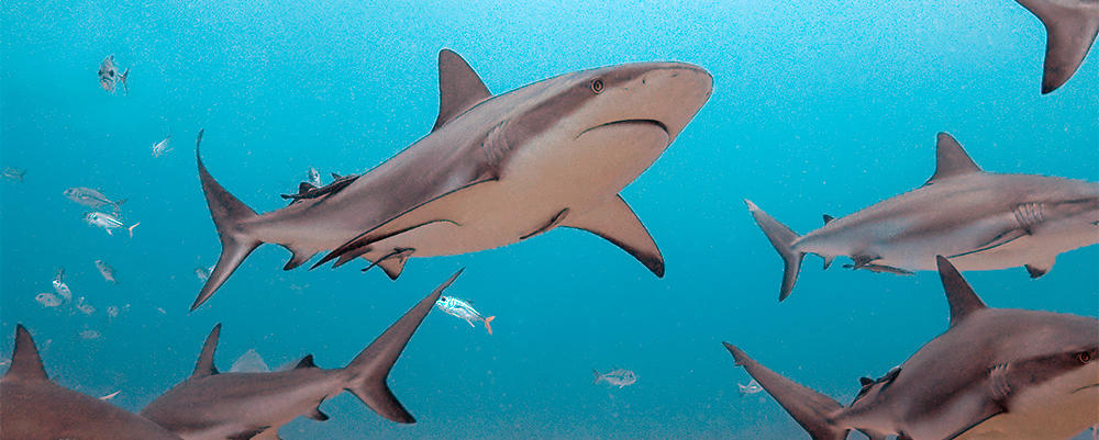3 facts about sharks