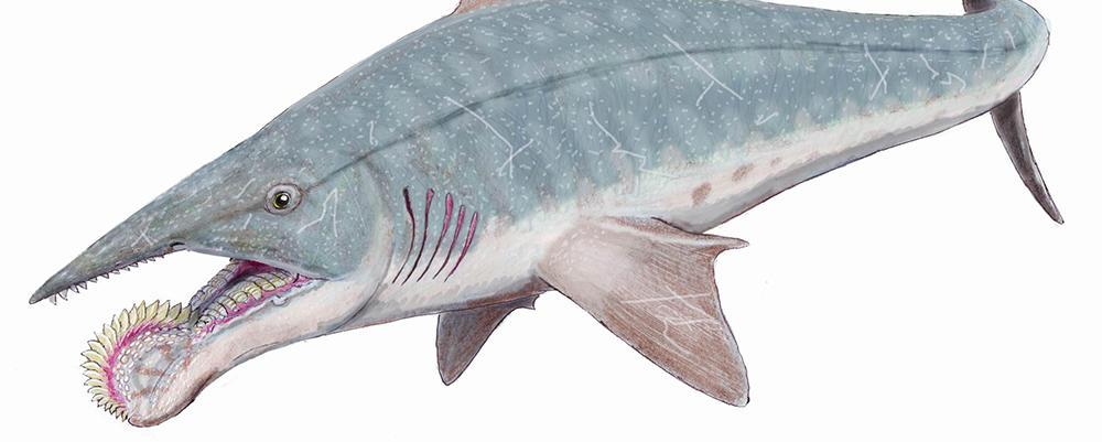 Heliocoprin Shark