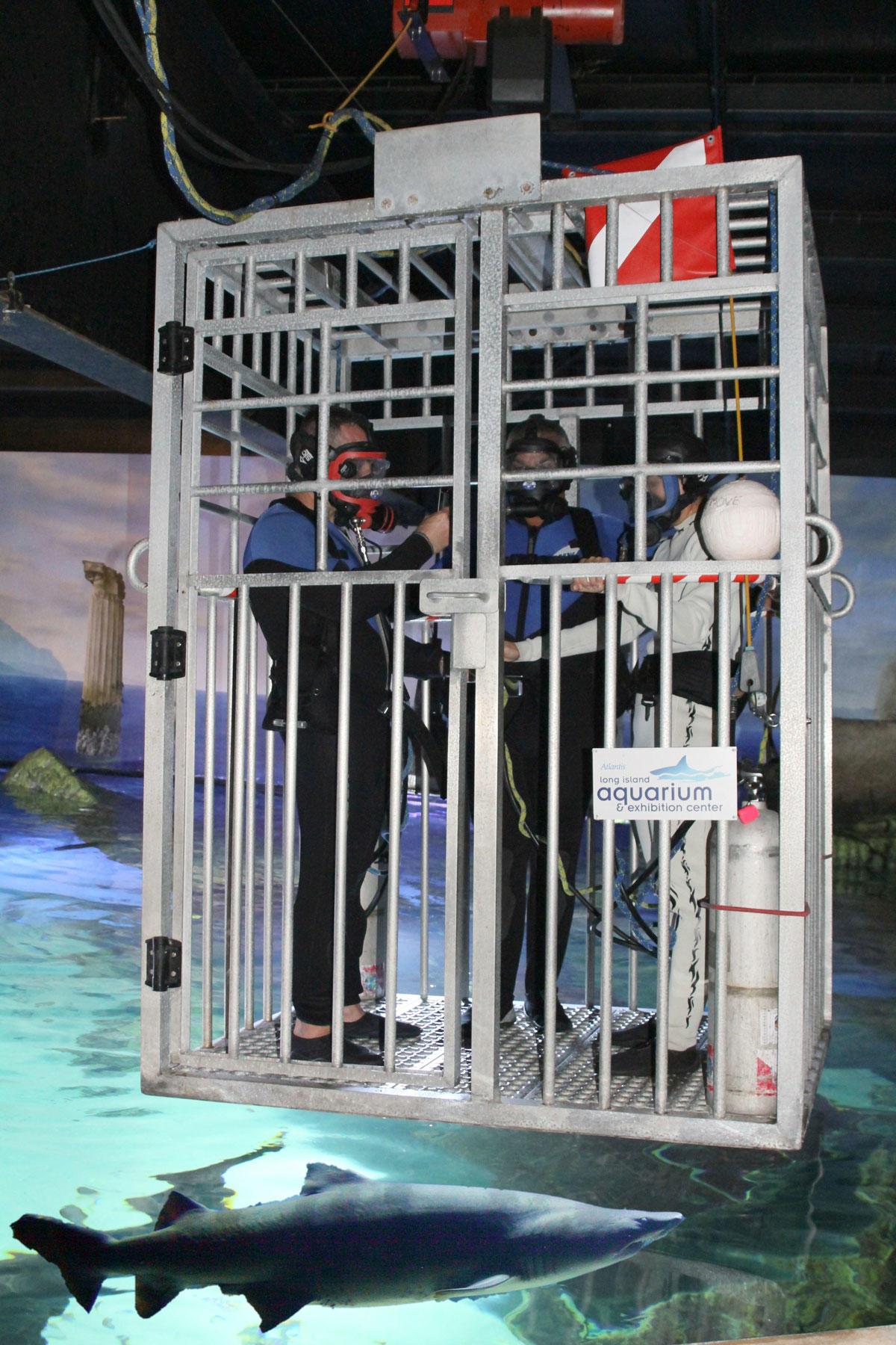 Shark Cage Wedding