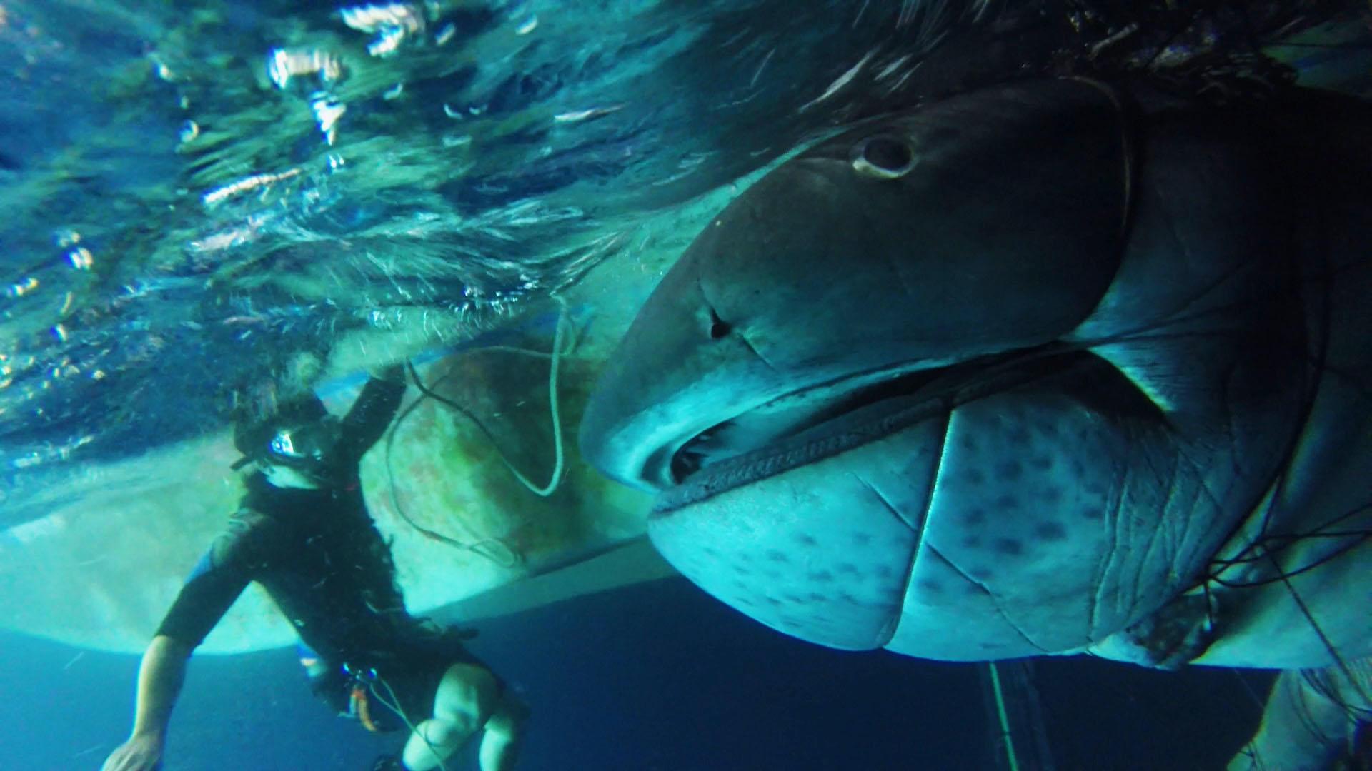 The Mega Mouth Shark 76