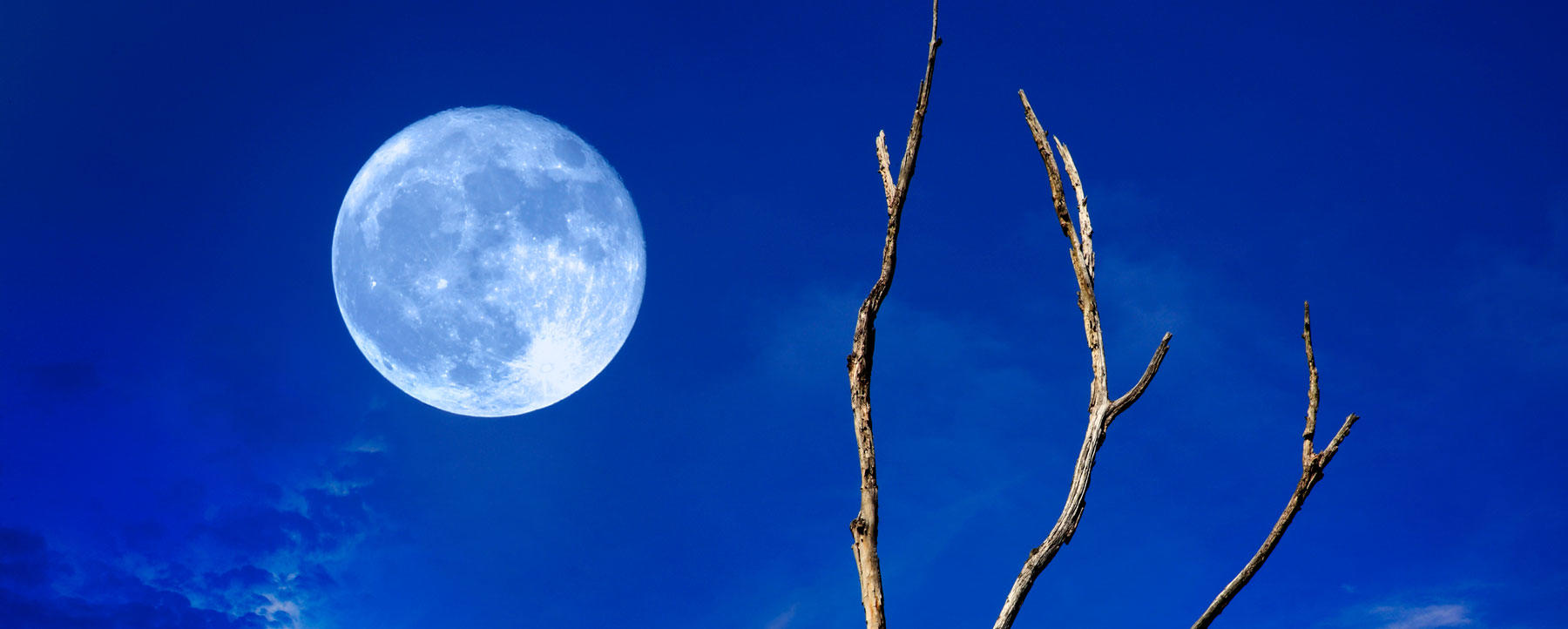 Blue moon and tree