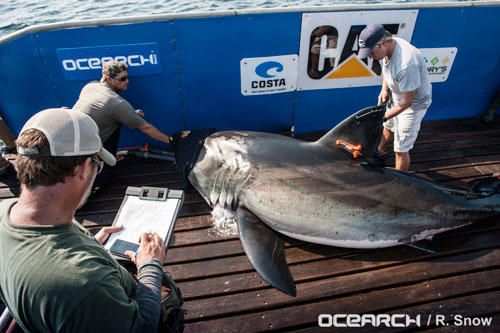 OCEARCH tagging