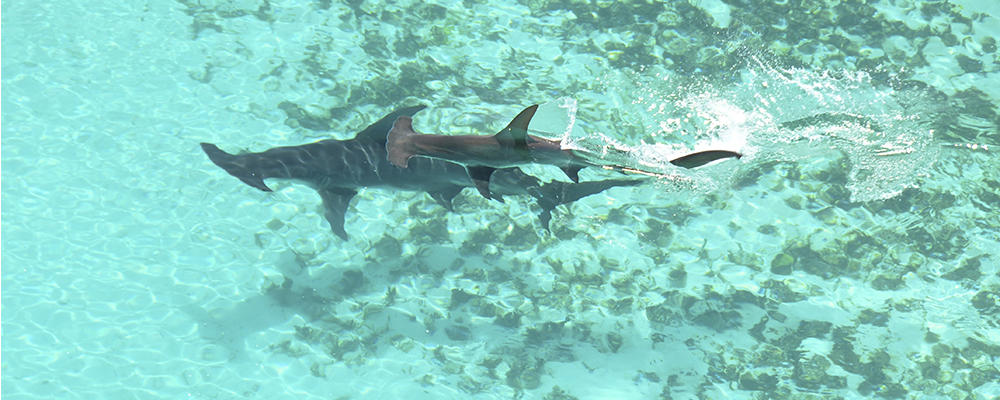 Секса акула фото смотреть онлайн фотоография