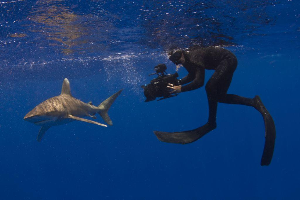 Joe Romeiro Filming Sharks