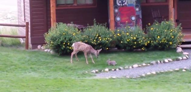 Deer & rabbit playing