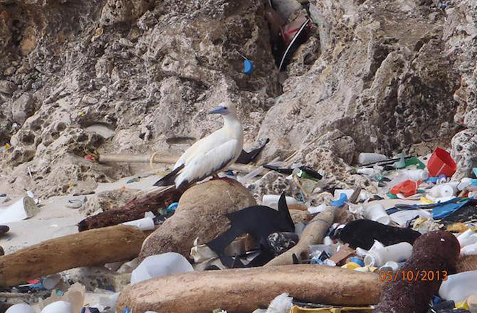 Seabird & pollution