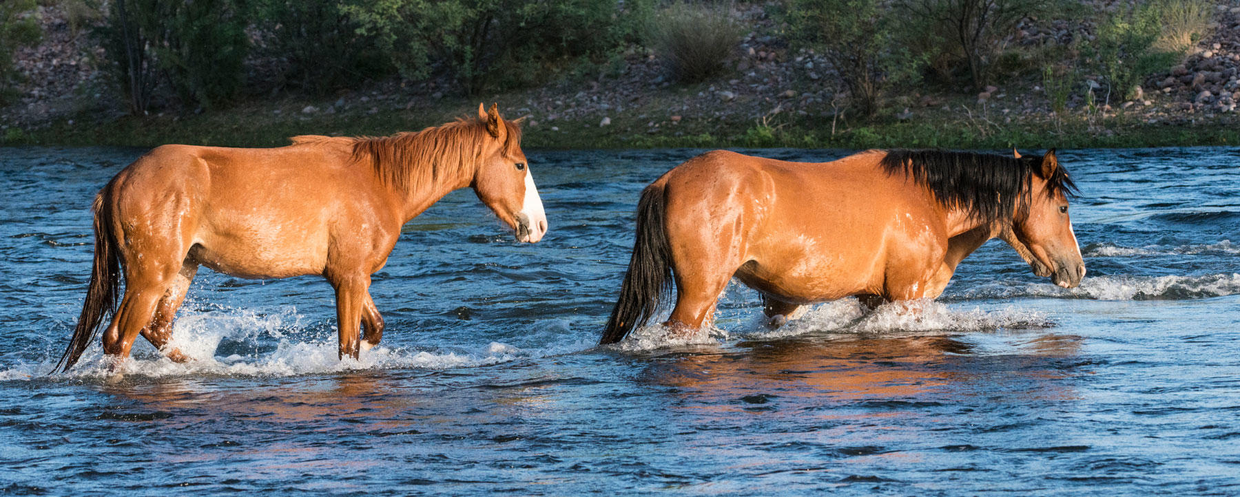 Wild horse river crossing