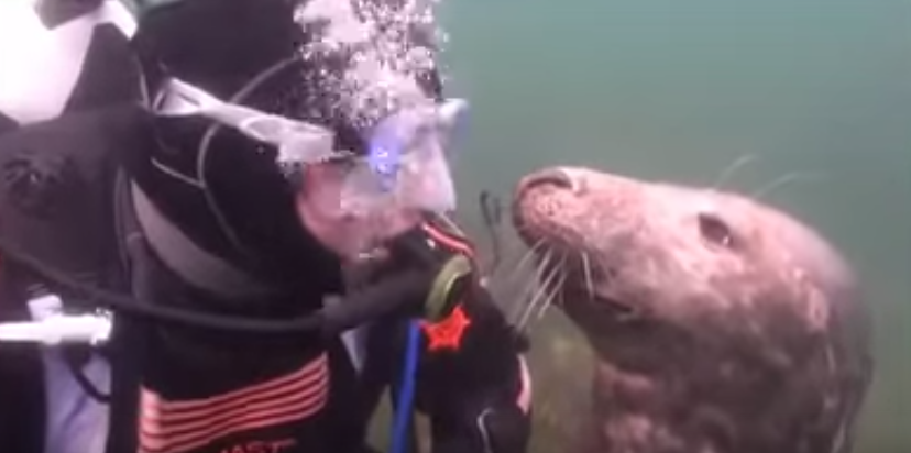 Seal and diver