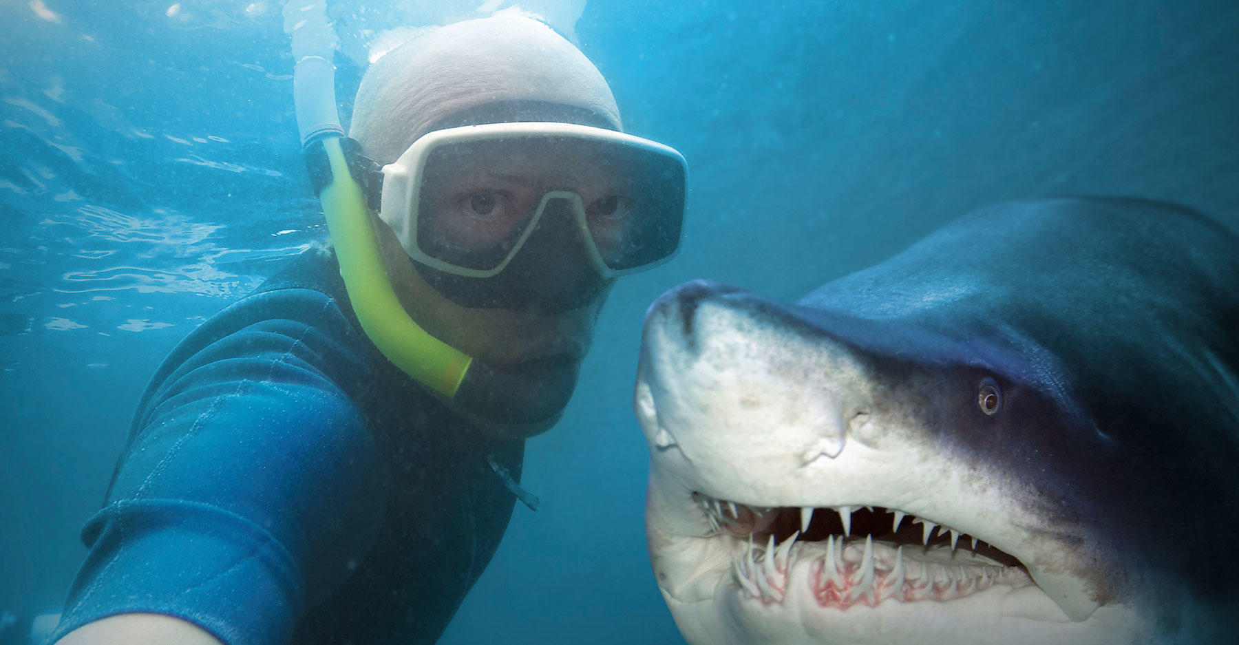 Shark diver takes selfie