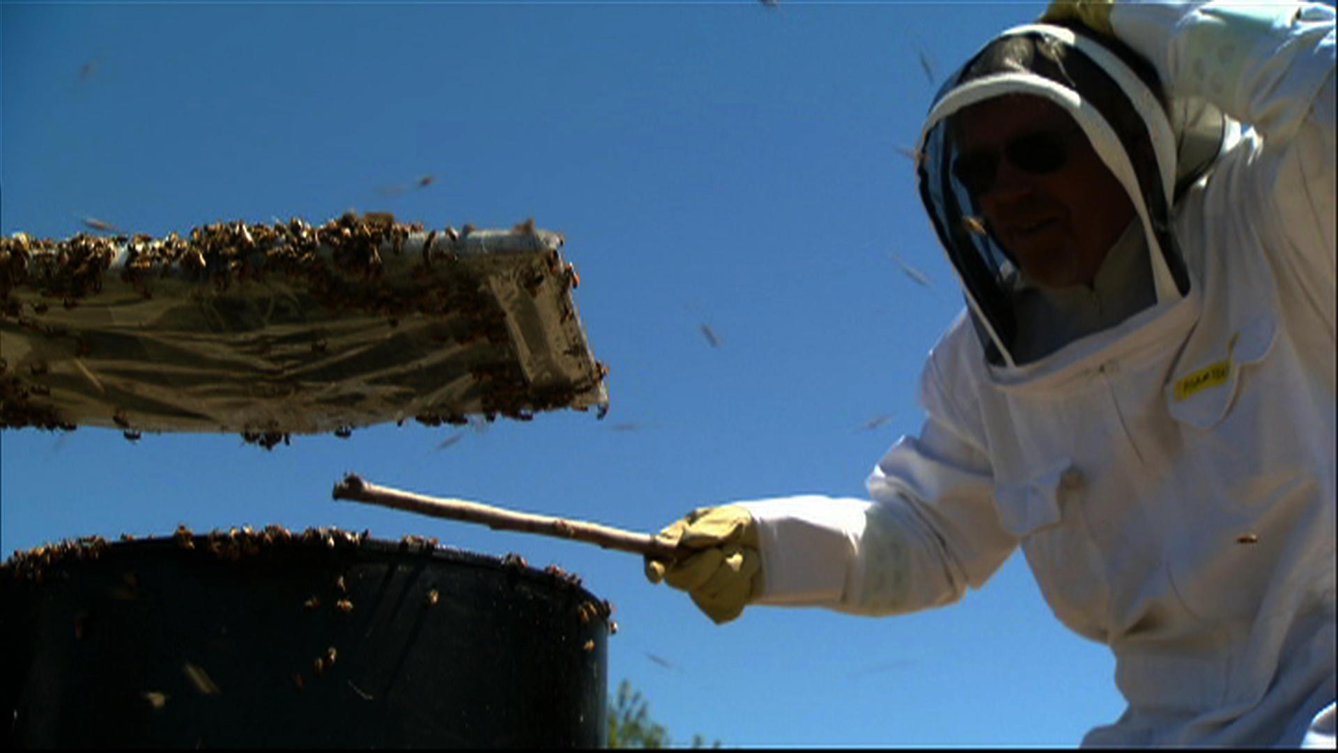 Bug Special (2010)