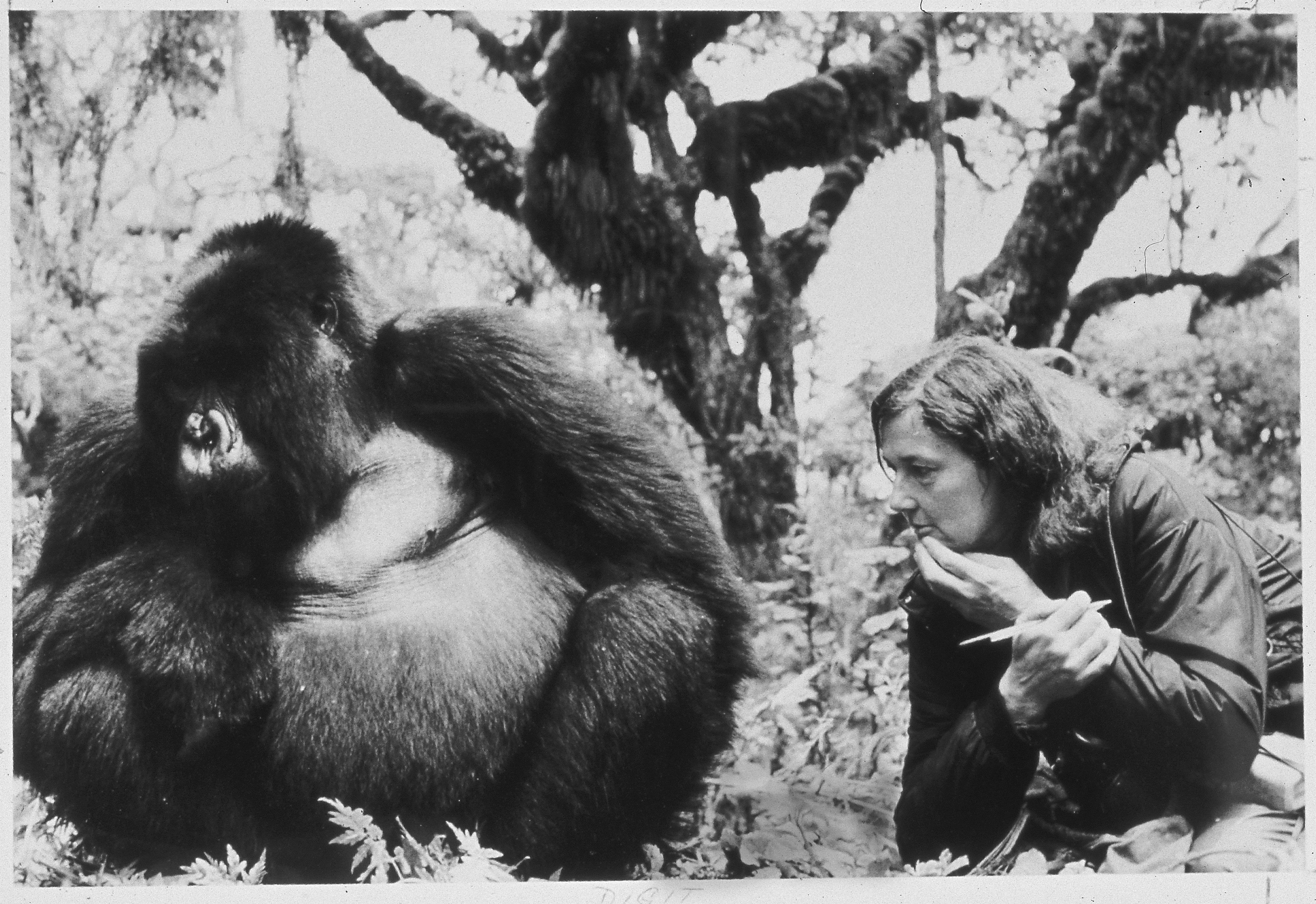 Dian Fossey and Digit