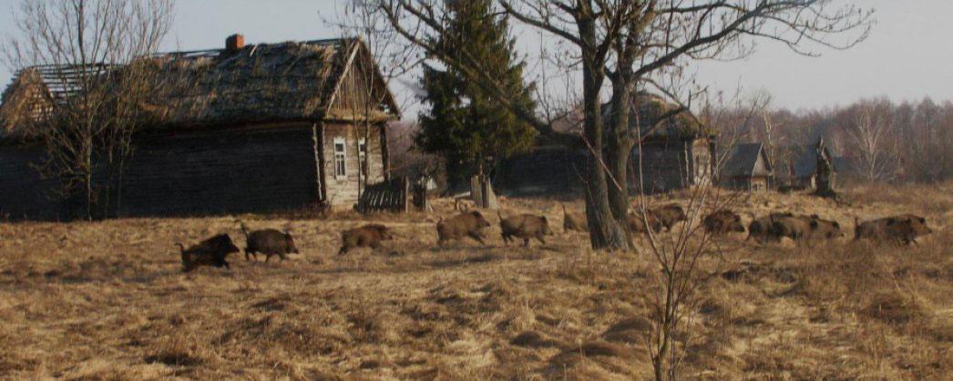 Wildlife in Chernobyl