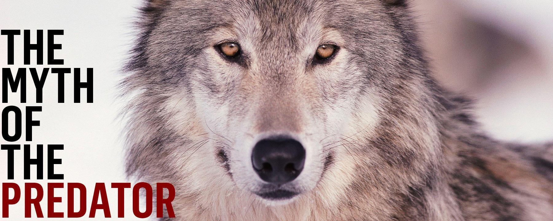 Myth of the Predator