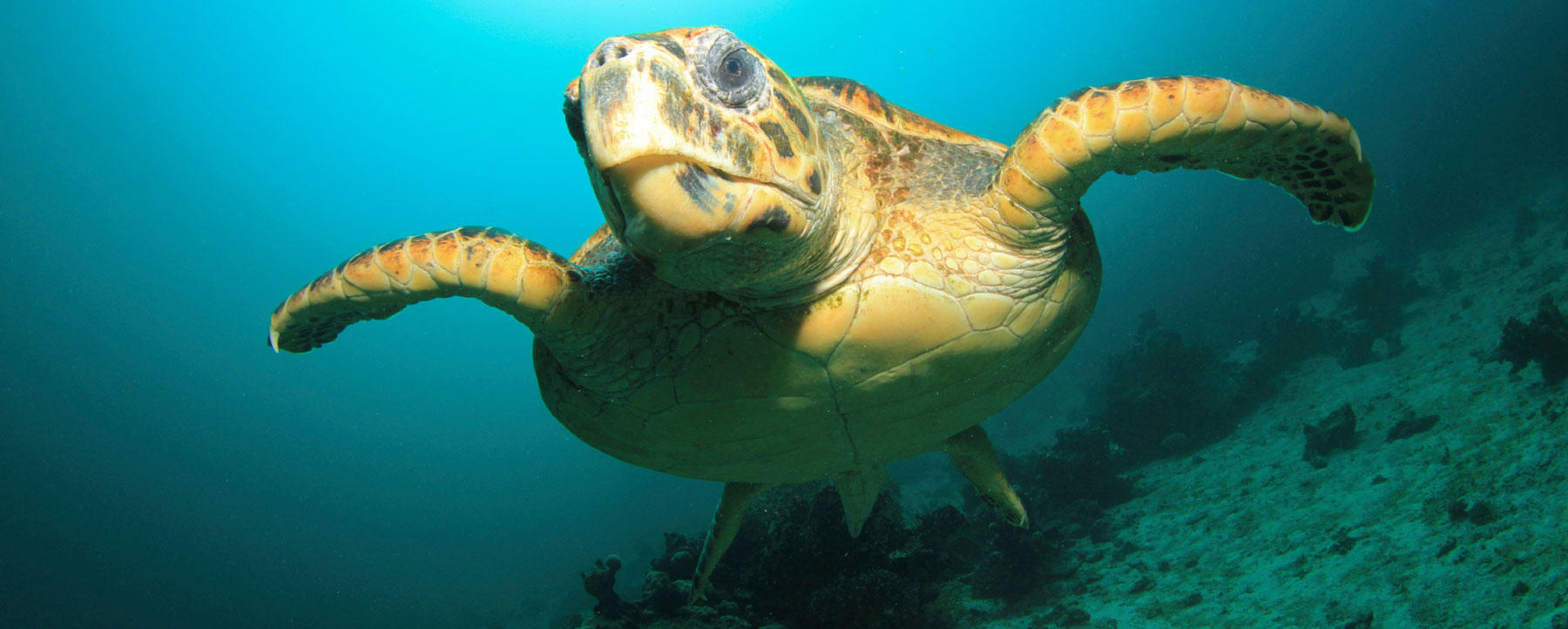 Sea turtle swimming stock photo