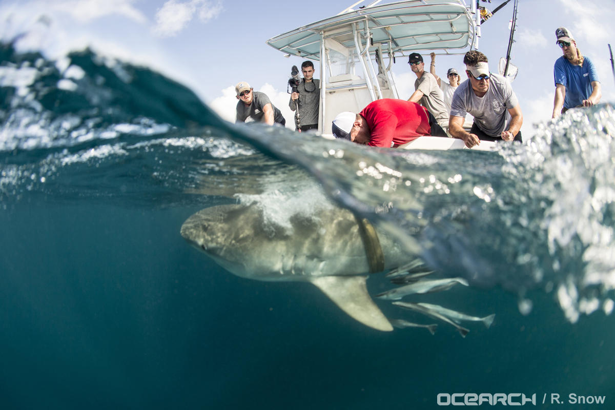 OCEARCH Gulf Expedition