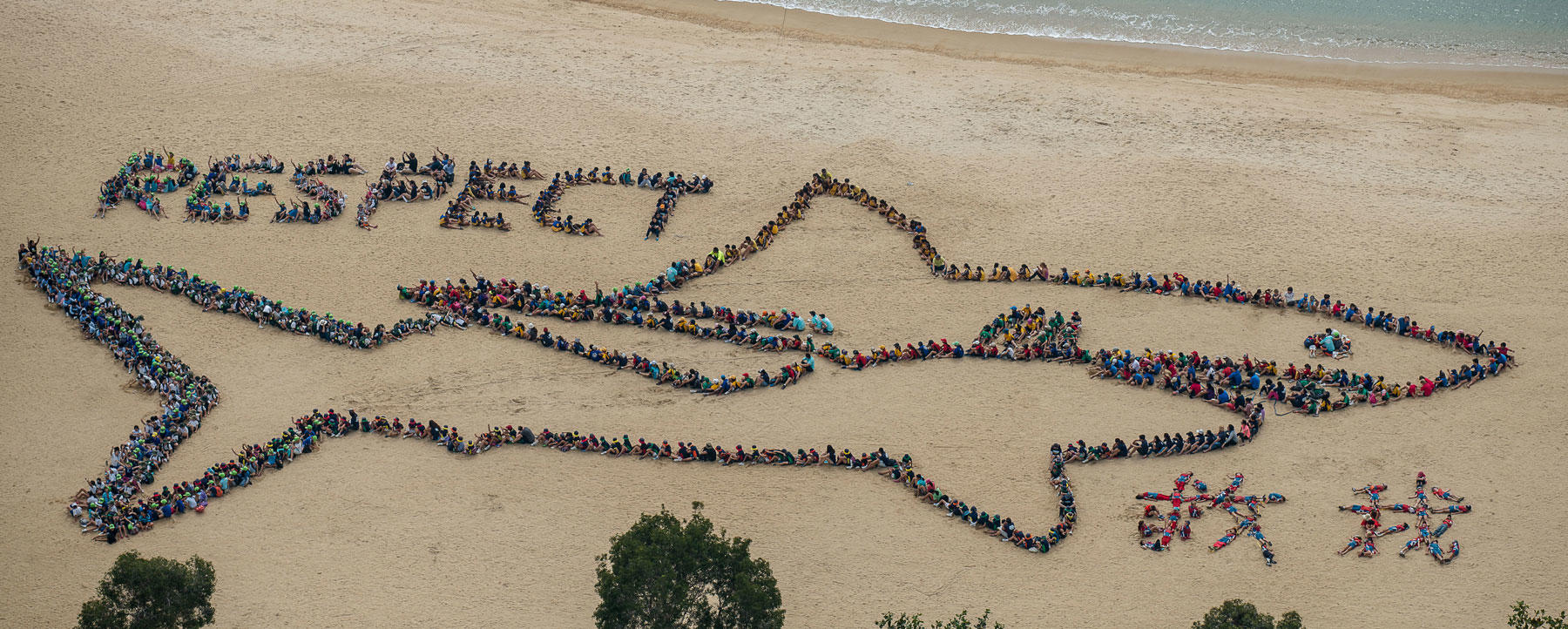 Respect sharks