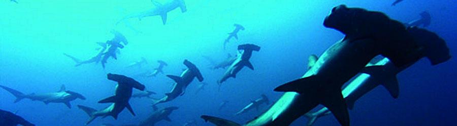 Top 10 Hammerhead Shark Videos