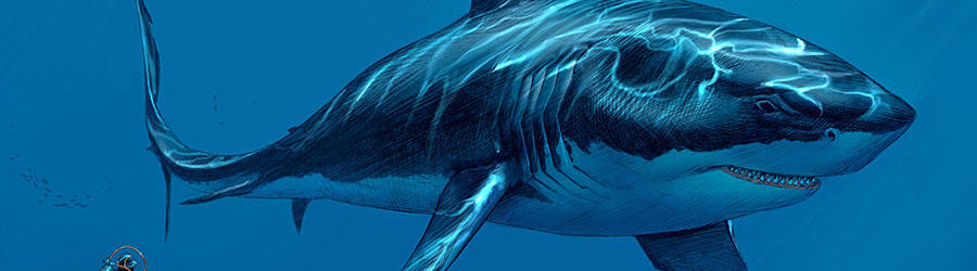 Megalodon: The Prehistoric World's Worst Nightmare