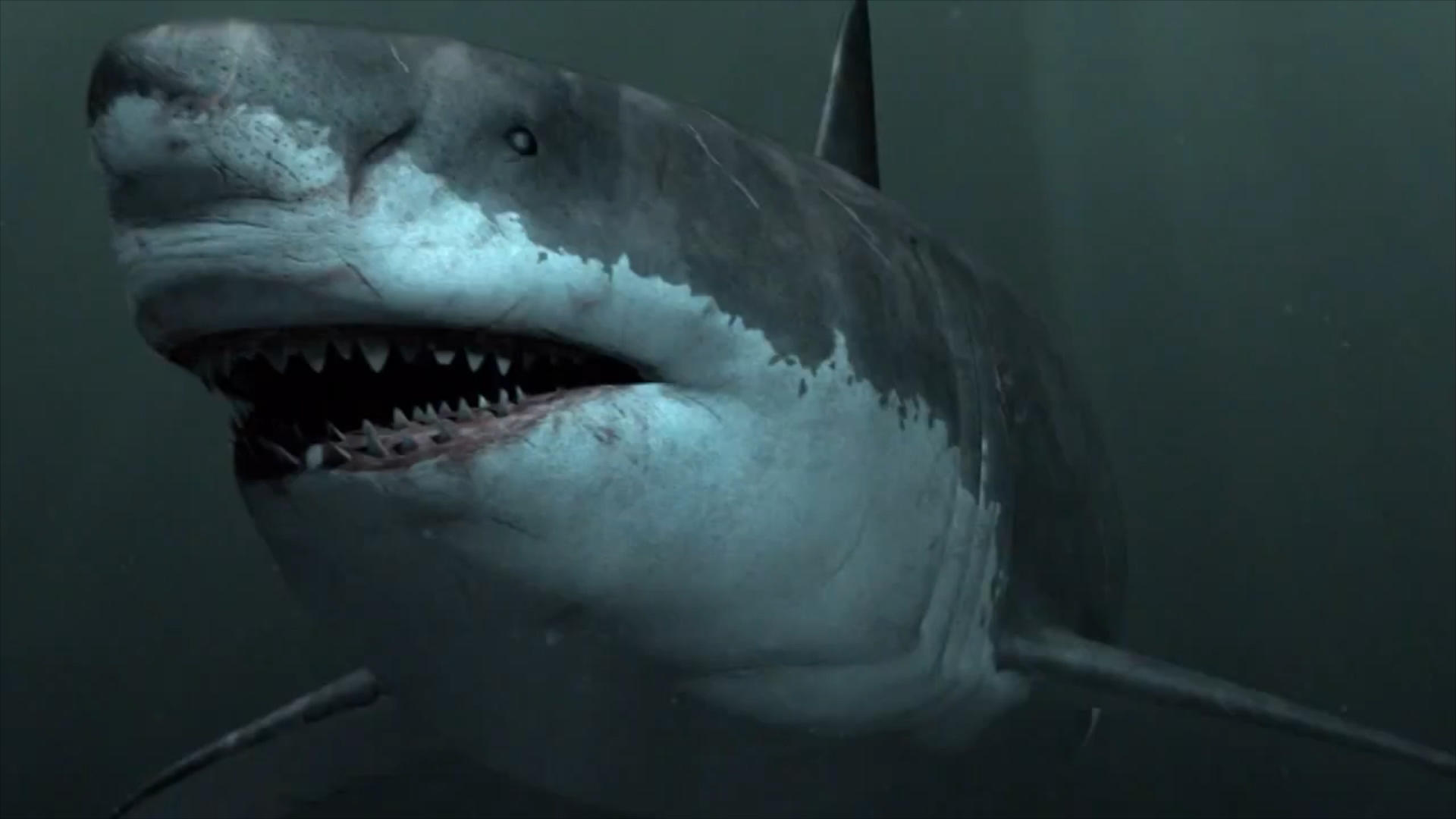 Is The Shark Week Megalodon Show On Discovery Channel Real | megalodon shark sightings have ...