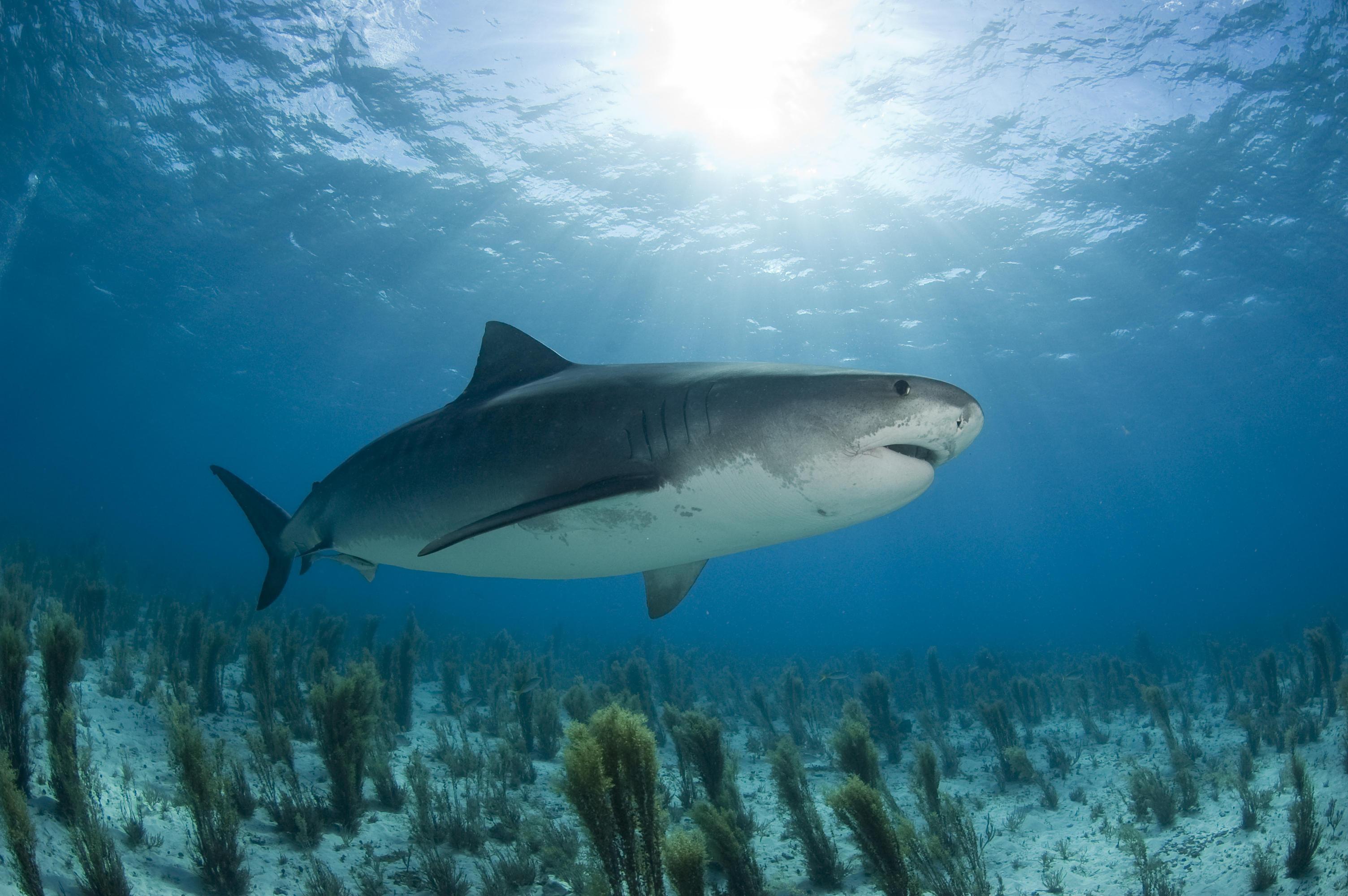 Happy shark chilling.