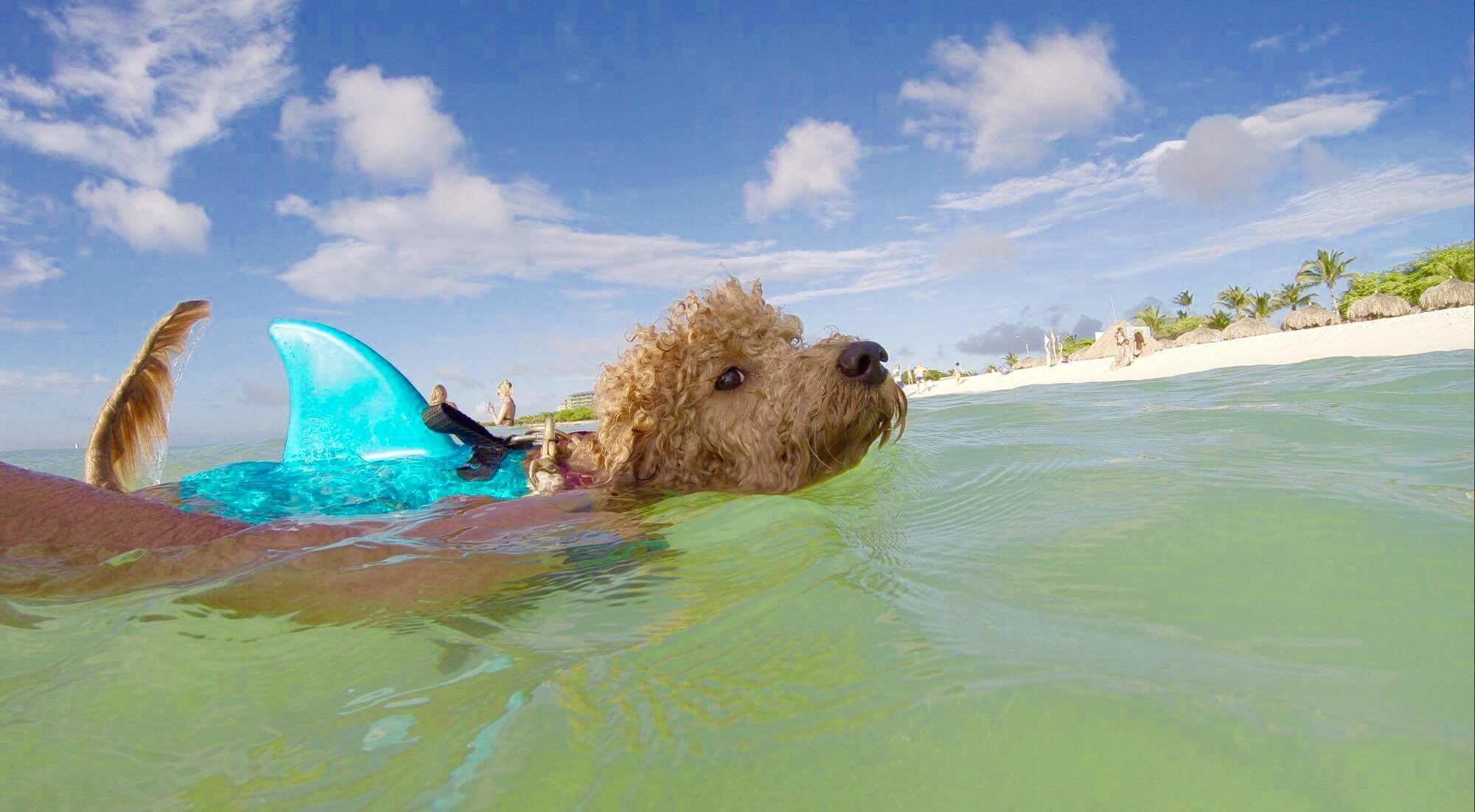 Gracie SHark pup2