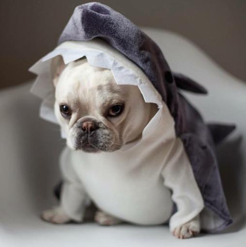 Theo_shark