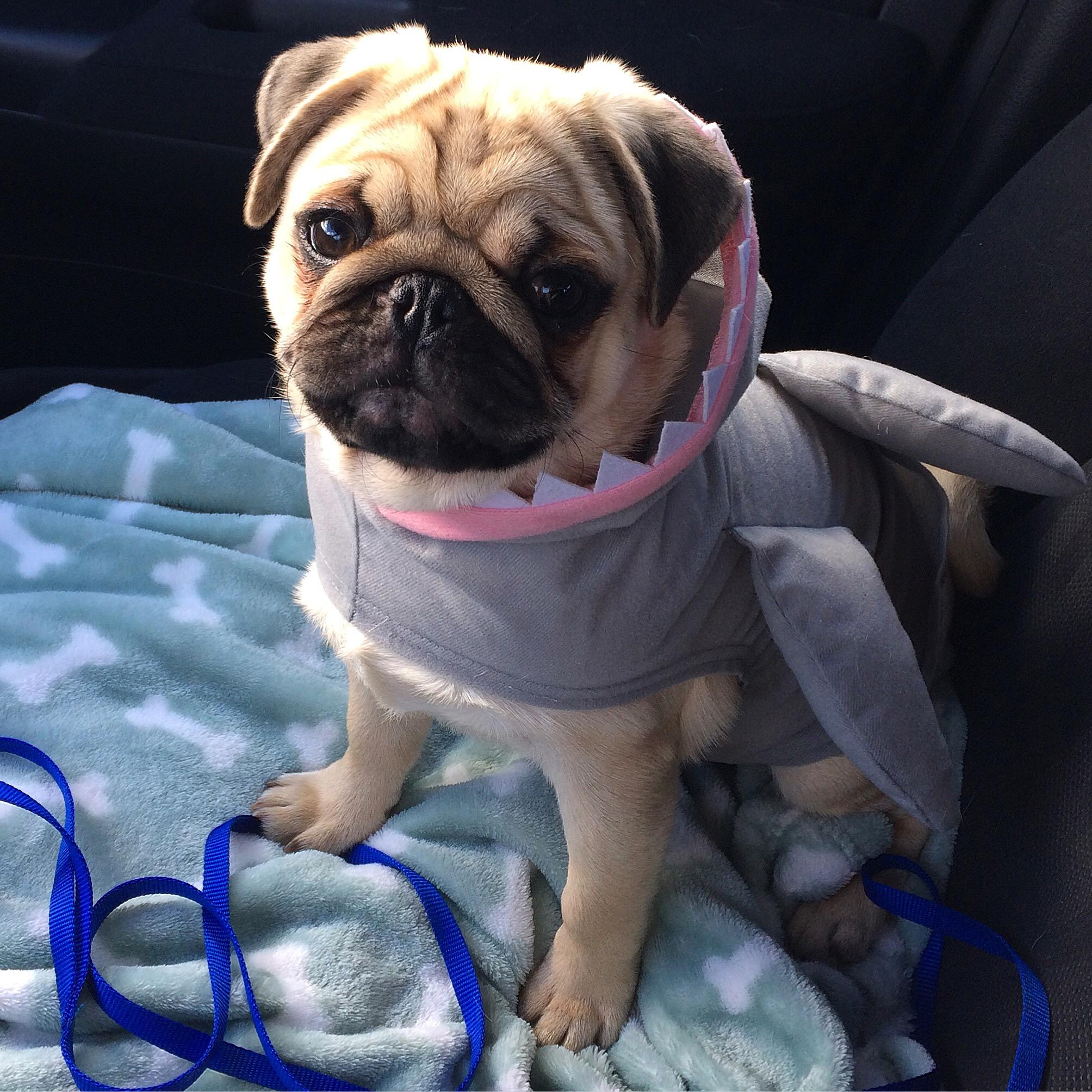 Tucker-Shark-2