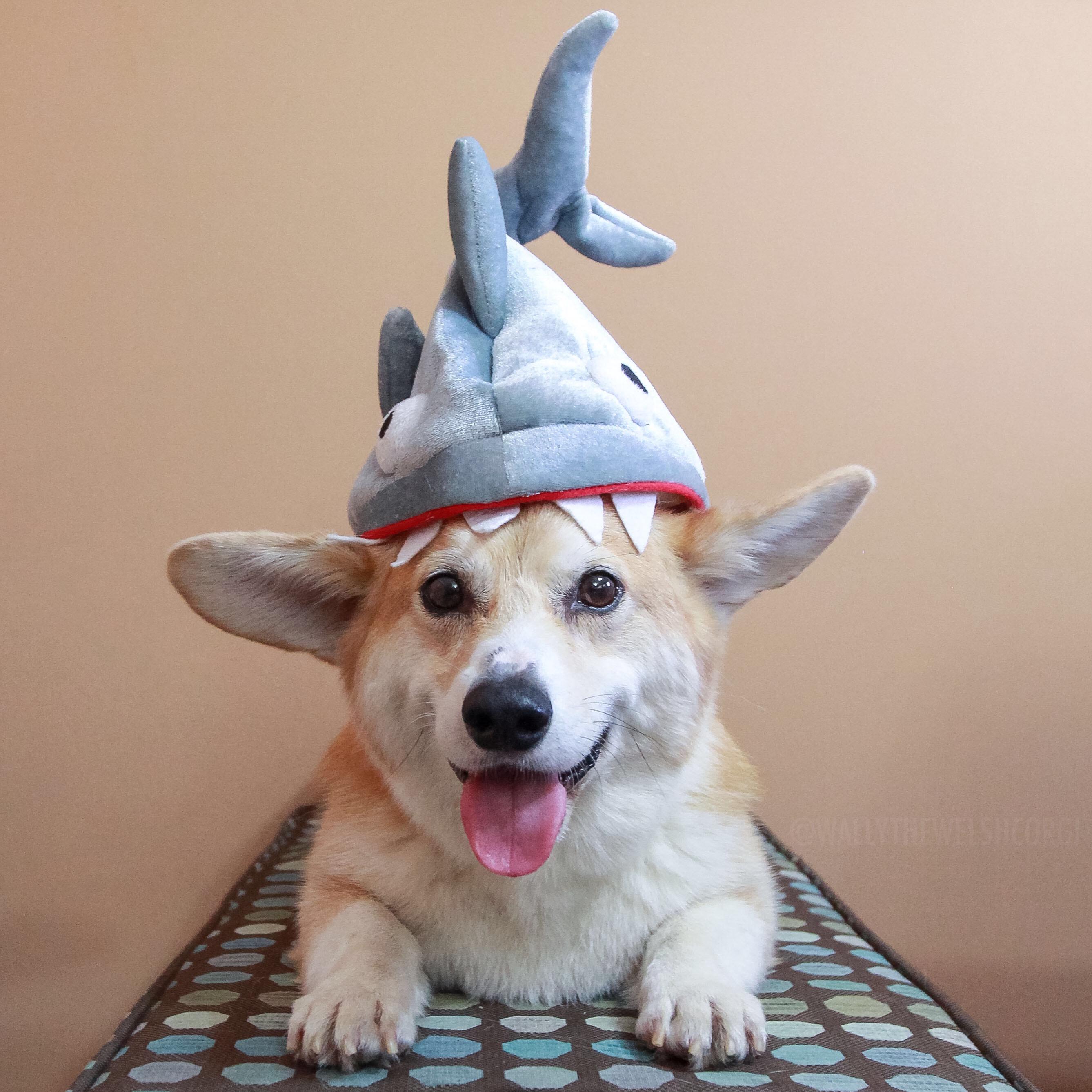 Wally Shark Hat
