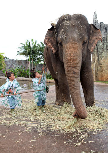 Bath time!  The Gosselin boys bathe their new buddy at Australia Zoo.