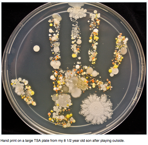 a handprint of bacteria on a petri dish