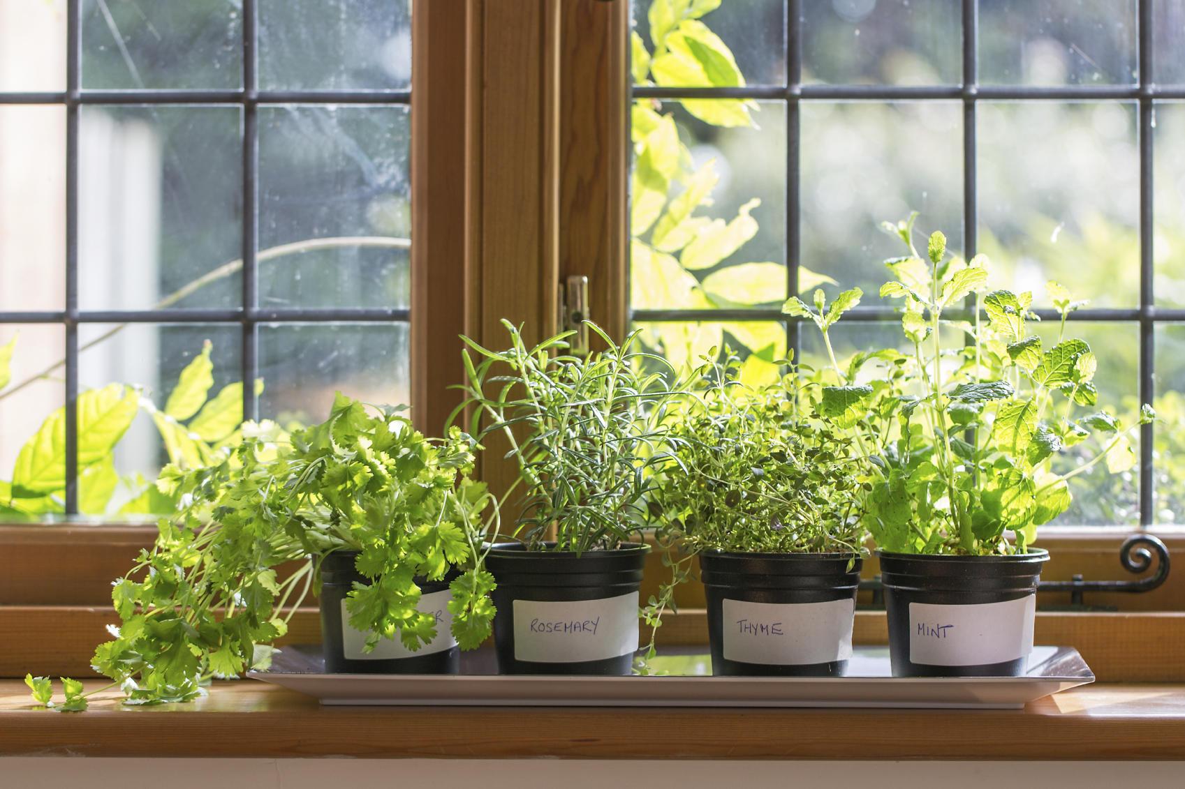 grocery-store-money-saving-herbs
