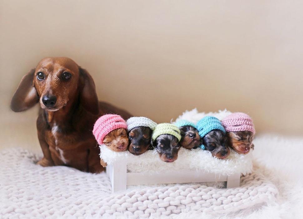 Dog Maternity Shoot