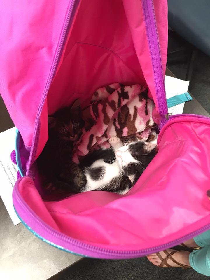 Kitten Stowaways