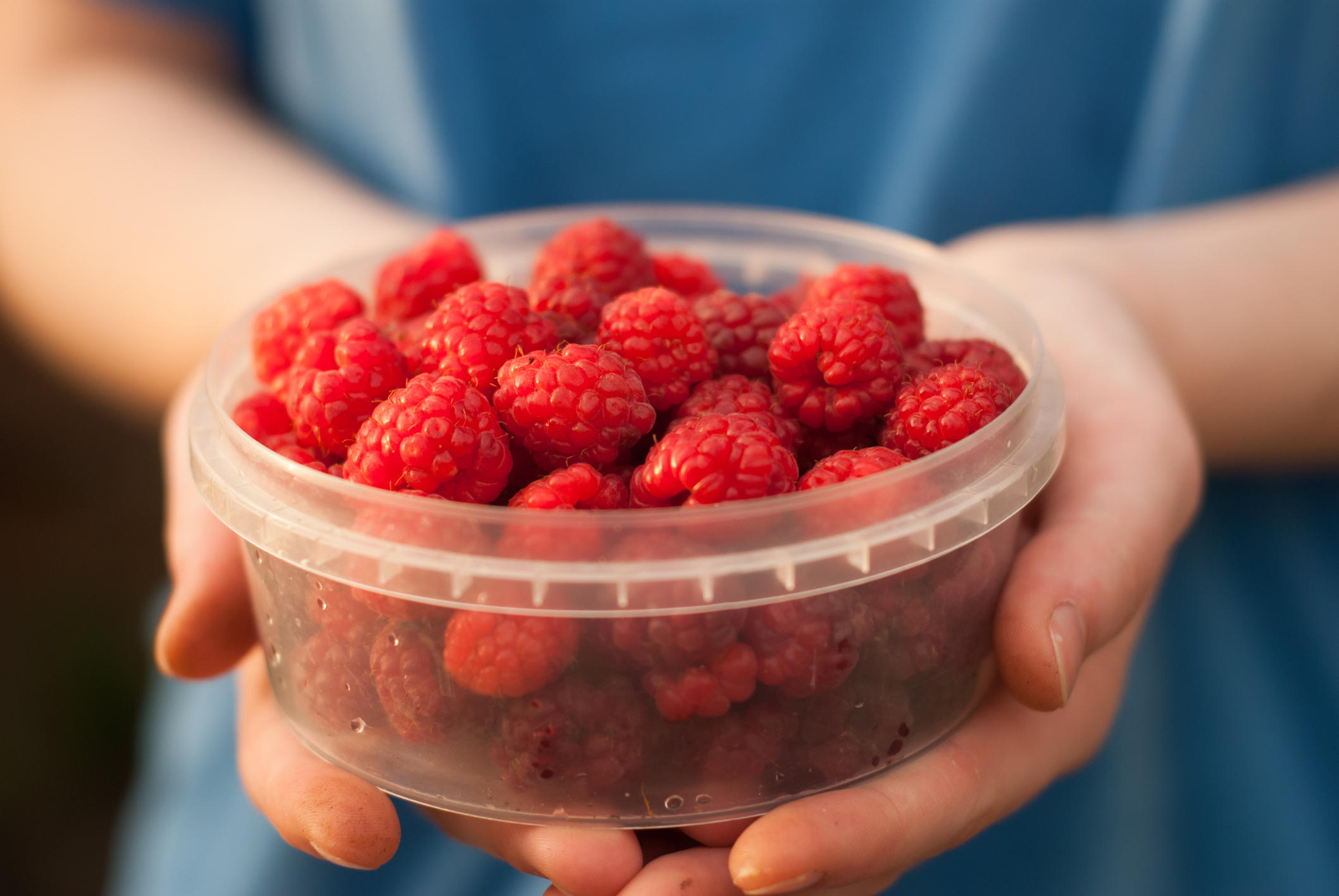 Child Holding Bowl of Fresh Raspberries Ready to Eat