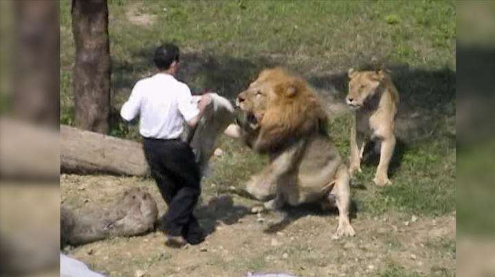 Image result for man who jumped into lions den