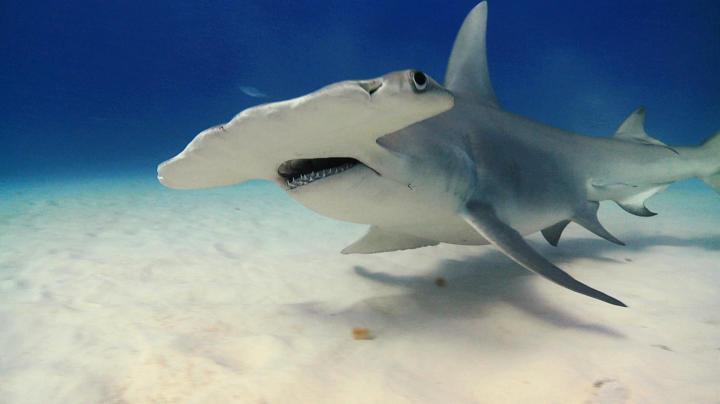 Shark Week 2015 Highlights | Shark Week | Discovery