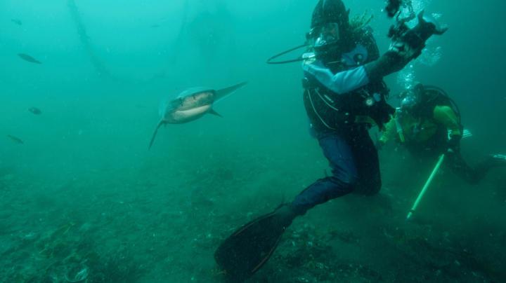 Sevengill Sharks Are Not Camera Shy | Shark Week | Discovery