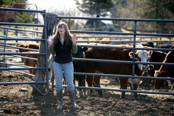 Charlotte Kilcher takes a moment to check on her cattle herd, making sure that the herd is all accounted for.