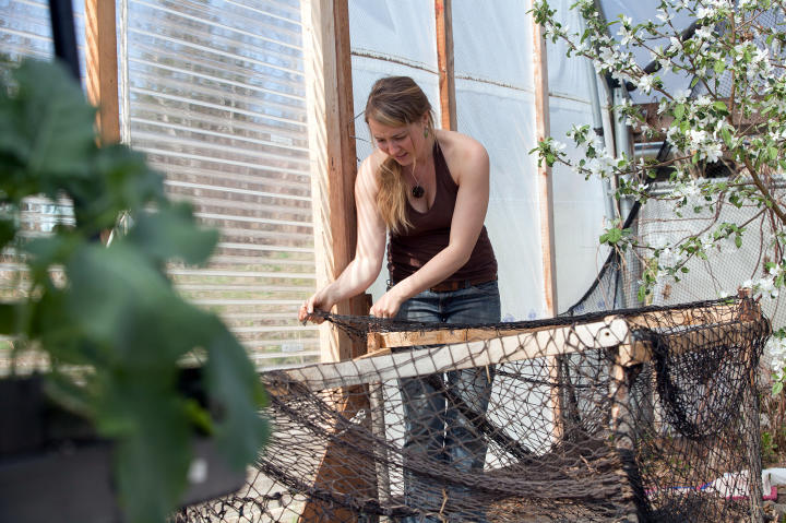 Eve stays at the homestead where she puts netting onto a makeshift playpen she built in the high tunnel. Hopefully, now she can free her hands of her baby boy Findlay and get some gardening done for this year's warm season.