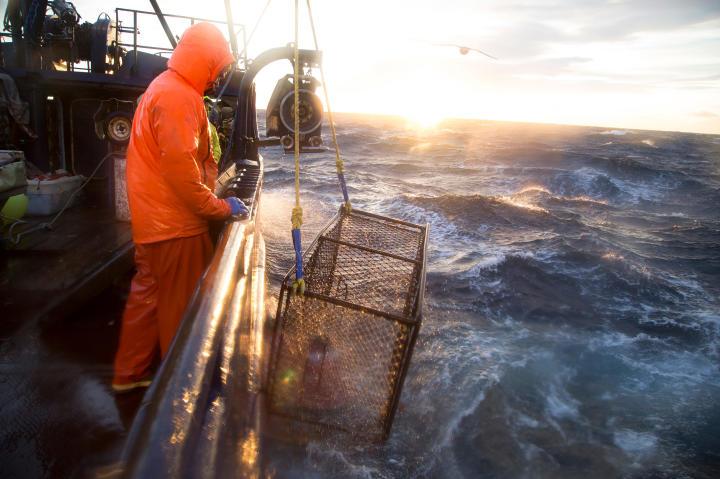 The Cape Caution hauls in a crab pot.