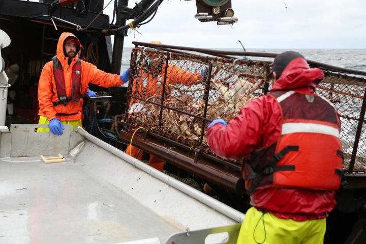 """Seabrooke deckhand Chris """"Whipper"""" Welch and greenhorn Nick Ocanaz empty a crab pot."""